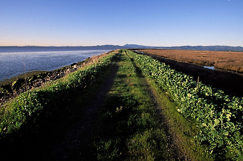 image 2-350-5 California, San Francisco Bay, San Pablo Nat Wildlife Refuge, Lower Tubbs Island levee