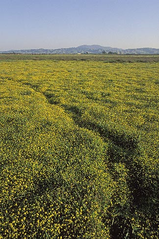image 2-401-3 California, Solano County, Collinsville, Montezuma Wetlands