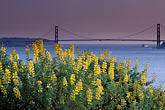yellow wildflower stock photography | California, San Francisco Bay, Golden Gate Bridge from Angel Island , image id 2-410-69