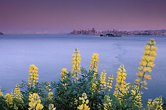 2-410-925  stock photo of California, San Francisco Bay, Angel Island State Park