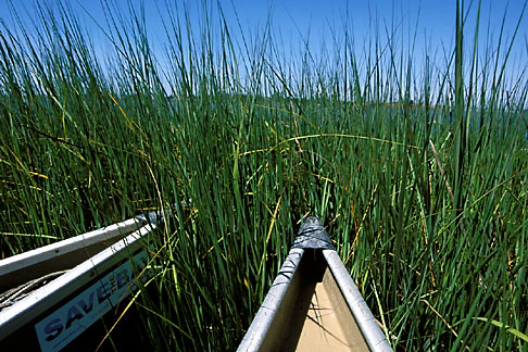 image 2-440-9 California, East Bay Parks, Arrowhead Marsh, Oakland, Canoes