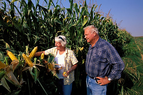 image 2-591-1 California, Delta, Staten Island, Couple in corn field