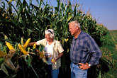 trio stock photography | California, Delta, Staten Island, Couple in corn field, image id 2-591-1