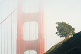 dawn stock photography | California, San Francisco Bay, Golden Gate Bridge in fog, image id 5-740-68