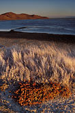 nobody stock photography | California, San Francisco Bay, Pickleweed and mudflats, Coyote Hills Park, image id 7-455-16