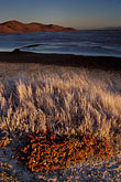native plant stock photography | California, San Francisco Bay, Grasses and mudflats, Coyote Hills Reg. Park, image id 7-455-17