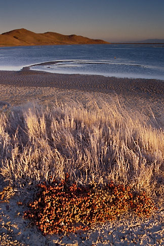 image 7-455-4 California, San Francisco Bay, Grasses and mudflats, Coyote Hills Reg Park