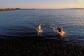 swim stock photography | California, East Bay Parks, Dogs, Point Isabel, image id 8-390-23