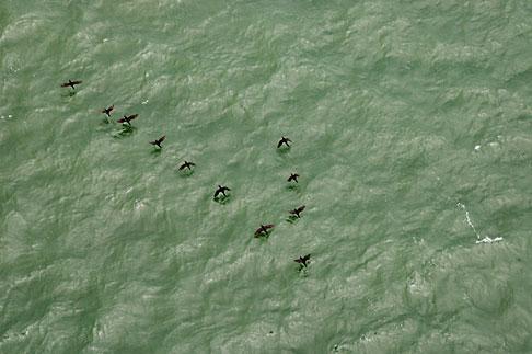 image S4-310-098 California, San Francisco Bay, Birds below on water