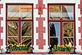 windows with flower boxes and tulips stock photography | Belgium, Bruges, Windows with flower boxes and tulips, image id 8-740-792