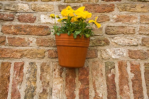 image 8-740-912 Belgium, Bruges, Flowerbox on brick wall