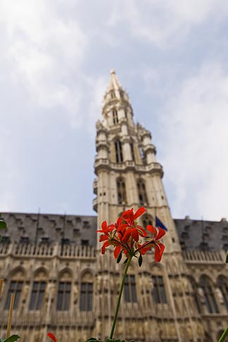 image 8-746-2673 Belgium, Brussels, Town Hall, Grand Place, spire with flower in foreground