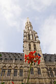 vertical stock photography | Belgium, Brussels, Town Hall, Grand Place, spire with flower in foreground, image id 8-746-2673