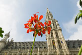 horizontal stock photography | Belgium, Brussels, Town Hall, Grand Place, spire with flower in foreground, image id 8-746-2679