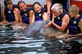 hands on stock photography | Bermuda, Dockyard, Swimming with dolphins, Dolphinquest, image id 1-600-10