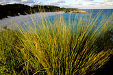 shore stock photography | Bermuda, Horseshoe Bay, grasses, image id 1-600-6