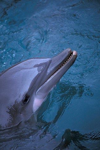 image 1-600-9 Bermuda, Dockyard, Dolphin