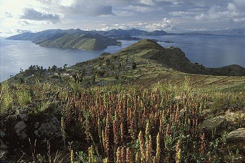 image 3-103-32 Bolivia, Lake Titicaca, Quinoa field above Yumani, Isla del Sol