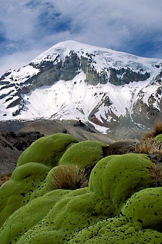 image 3-149-32 Bolivia, Sajama , Moss covered rocks beneath Sajama
