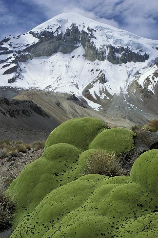 image 3-149-34 Bolivia, Sajama , Moss covered rocks beneath Sajama