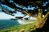 trees stock photography | California, Point Reyes, Point Reyes Beach from bluff, image id 0-280-10