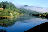 trees stock photography | California, Russian River, Early morning mist, image id 0-341-36