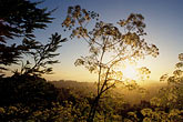 sunset scenic stock photography | California, East Bay Parks, Tilden Regional Park, Cow parsnip on Vollmer Peak, image id 0-431-31