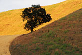 solitary tree stock photography | California, San Luis Obispo County, Cammatti Valley, Oak and hillside, image id 0-520-8