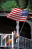 fun stock photography | Flags, Ameican Flags and balcony - with dog, image id 1-640-70