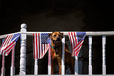 horizontal stock photography | Flags, Ameican Flags and balcony - with dog, image id 1-640-72