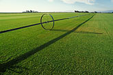 sod stock photography | California, Solano County, Suisin, Irrigated turf farm, image id 1-847-18