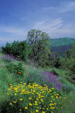 sky stock photography | California, Mt Diablo, Spring flowers on East Trail, image id 2-36-20
