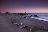 twilight stock photography | California, San Luis Obispo County, San Simeon, elephant seals with moonrise, image id 2-651-19