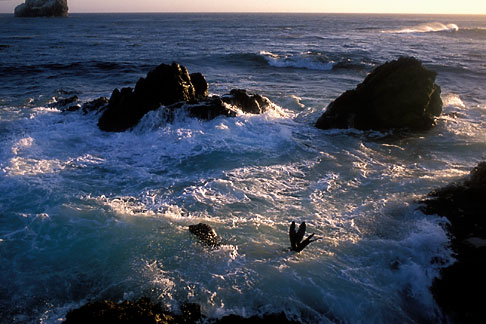 image 2-651-9 California, San Luis Obispo County, San Simeon coast, harbor seals