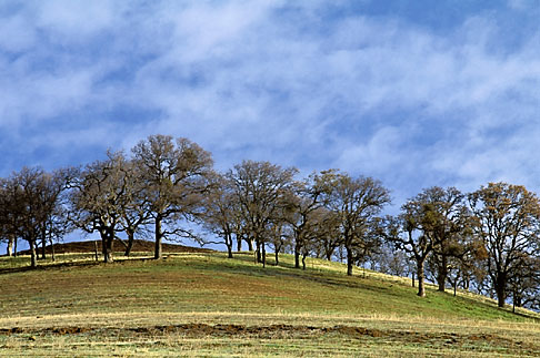 image 3-10-35 California, Contra Costa, Hillside in early morning on Marsh Creek Road