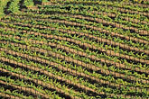 cropland stock photography | California, Napa County, Vineyards on Howell Canyon Road, image id 3-301-34