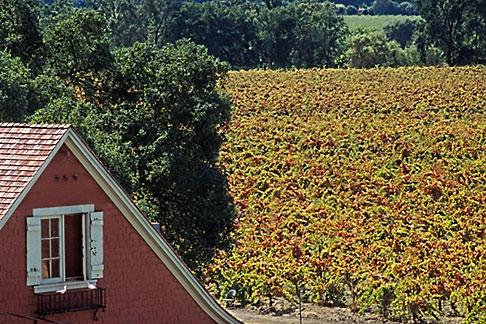 image 3-307-35 California, Napa County, Vineyards and house in Autumn, Silverado Trail