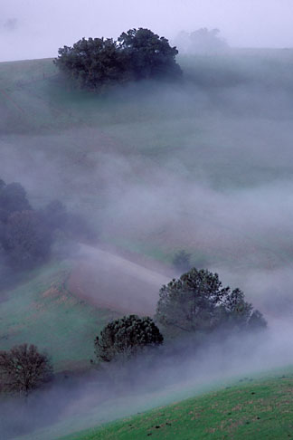 image 3-59-24 California, Mt Diablo, Morning fog on hills