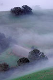 tree stock photography | California, Mt Diablo, Morning fog on hills, image id 3-59-24