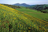 mt diablo and spring flowers stock photography | California, East Bay Parks, Mt Diablo & spring flowers, Morgan Territory Reg. Park, image id 3-72-7