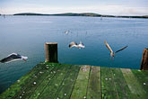 flight stock photography | California, Bodega Bay, Pier, Lucas Wharf, image id 4-561-64