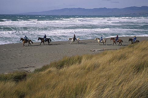 image 4-562-23 California, Bodega Bay, Horseback riding on the beach, Bodega Dunes