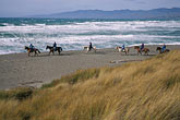 coast stock photography | California, Bodega Bay, Horseback riding on the beach, Bodega Dunes, image id 4-562-23
