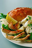 foodstuff stock photography | California, Bodega Bay, Dungeness crab, image id 4-563-37
