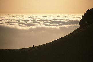 4-701-99  stock photo of California, Marin County, Mount Tamalpais State Park, Hiker on ridge