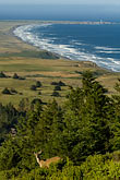 wave stock photography | California, Point Arena, Manchester State Park. elevated view, with deer, image id 4-800-26