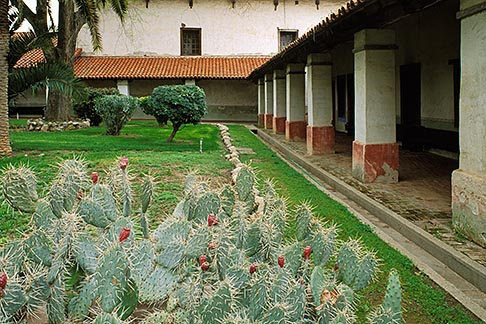 image 5-119-5 California, Missions, Cactus in courtyard, Mission San Miguel Arcangel