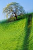 blurred motion stock photography | California, Contra Costa, Oak tree on hillside, Empire Mine Road, image id 5-148-11