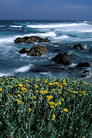 image 5-207-10 California, Monterey, Beach and flowers, 17 Mile Drive