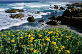 shoreline wildflowers stock photography | California, Monterey, Beach and flowers, 17 Mile Drive, image id 5-207-8